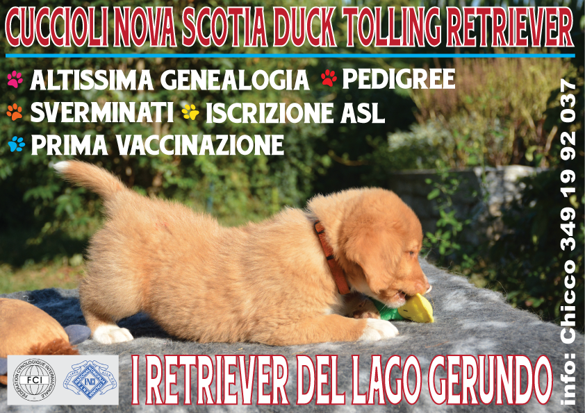 Cucciolata disponibile